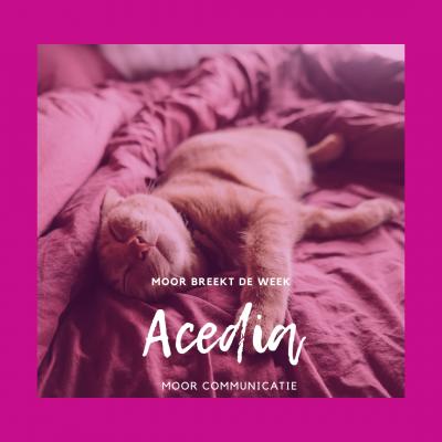 Acedia: gemakzucht, traagheid en luiheid